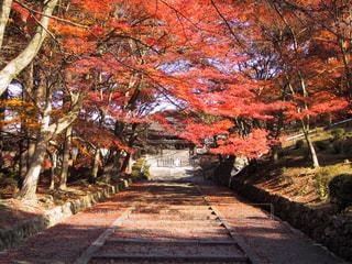 自然,風景,京都,山,景色,旅行,寺,毘沙門堂