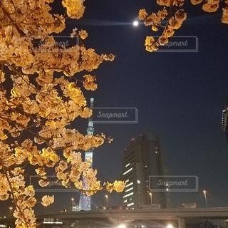 満月と桜のパワーの写真・画像素材[3243735]