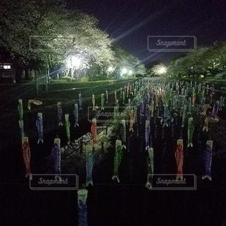 鯉のぼりと桜のコラボの写真・画像素材[3250535]