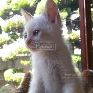 子猫の写真・画像素材[3244712]