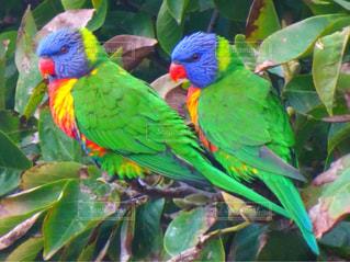 カラフルな鳥はハートを作るの写真・画像素材[3243875]