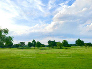 緑豊かな畑のクローズアップの写真・画像素材[3254771]