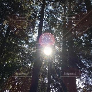 木の間から日差し指すの写真・画像素材[3251102]