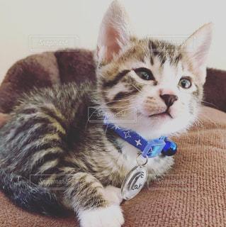 子猫キジトラ♂の写真・画像素材[3254550]