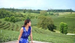 茶畑の景色に癒される女性の写真・画像素材[2393122]