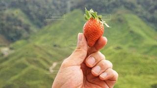 果物を持つ手の写真・画像素材[3144490]