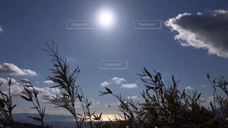 空を飛んでいる鳥の群れの写真・画像素材[3262735]