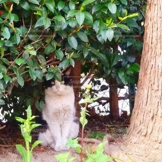 野良猫の写真・画像素材[3249424]