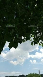 木のクローズアップの写真・画像素材[3273764]