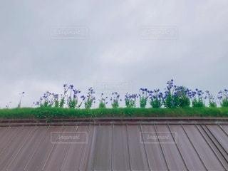 梅雨空の下での写真・画像素材[3411178]