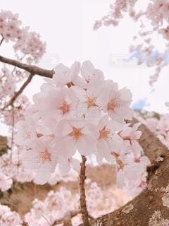 春が来た!の写真・画像素材[3572302]
