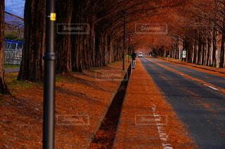 秋深しの写真・画像素材[3695925]