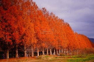 オレンジの写真・画像素材[3719973]