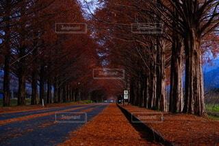 並木道の写真・画像素材[3721545]