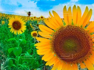 夏の思い出の写真・画像素材[3251596]