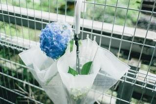 紫陽花と傘の写真・画像素材[3393071]