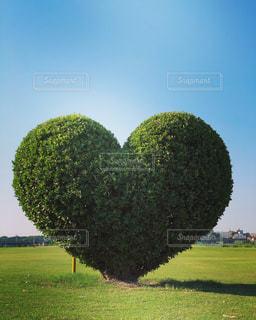 モアナルア庭園を背景にした庭園の緑の植物の写真・画像素材[3408848]