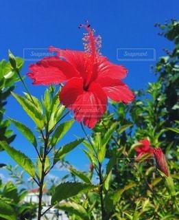 植物の上のピンクの花の写真・画像素材[3576730]
