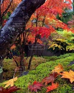 森の中の植物の写真・画像素材[3799109]