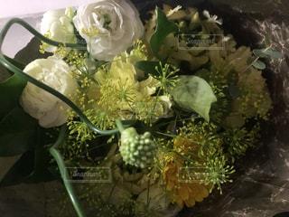 花のクローズアップの写真・画像素材[3262396]