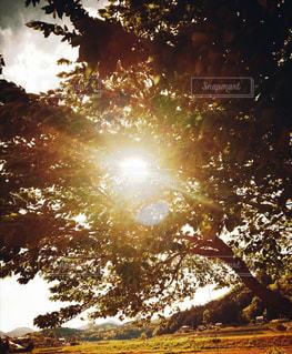 木漏れ日の写真・画像素材[3287645]