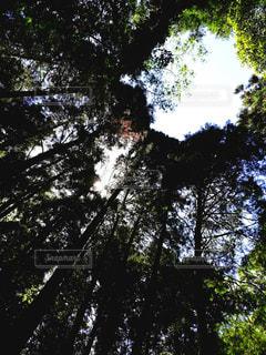 森林浴の写真・画像素材[3306697]