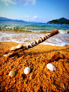 砂浜、流木、貝殻の写真・画像素材[3579230]