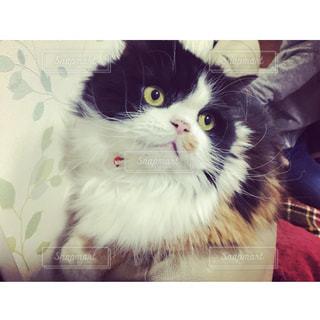 ベッドに横たわる猫の写真・画像素材[3260830]