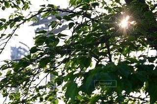 木のクローズアップの写真・画像素材[3257305]