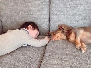 ソファに横たわっている犬と男の子の写真・画像素材[3368689]