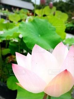 花のクローズアップの写真・画像素材[3369564]