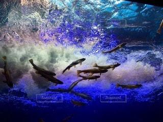 水中の写真・画像素材[3339077]