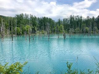 青い池の写真・画像素材[4408187]