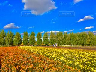 北海道の富田ファームの写真・画像素材[4453037]
