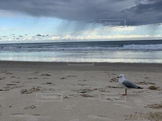 砂浜の上に立っている鳥の写真・画像素材[3588616]