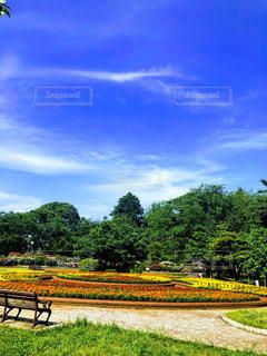 背景に木々のある大きな緑のフィールドの写真・画像素材[3267997]
