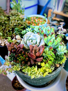 多肉植物の鉢の写真・画像素材[3278105]