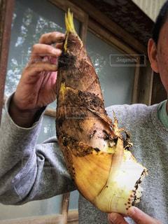 掘った筍を掲げる男性の写真・画像素材[3280114]