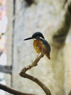 枝に座っているカワセミの写真・画像素材[3288095]