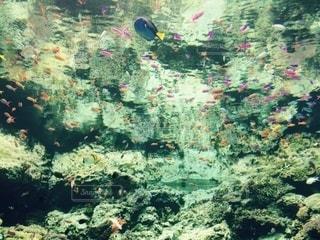 水の世界の写真・画像素材[3262052]