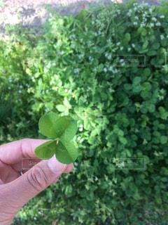 自然の写真・画像素材[458990]