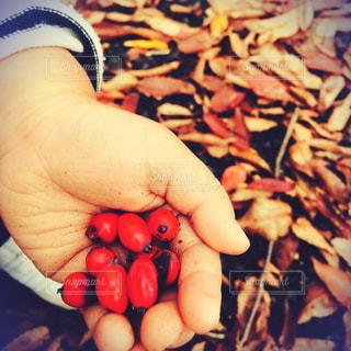 秋の写真・画像素材[527663]
