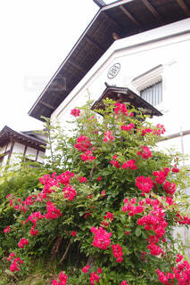 花の写真・画像素材[528371]