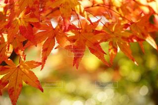 近くの木のアップの写真・画像素材[870373]