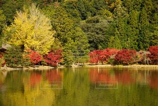 木々 に囲まれた水の体の写真・画像素材[1219967]