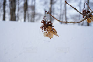 雪景色の写真・画像素材[1220666]
