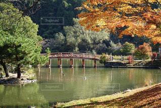 木々 に囲まれた水の体の写真・画像素材[1220687]