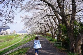 自然,春,桜,屋外,散歩,子供,お花見,後姿,お散歩,ライフスタイル,おでかけ