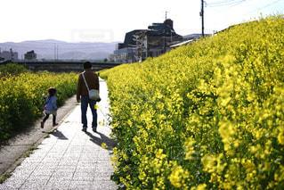 2人,自然,春,屋外,親子,散歩,菜の花,子供,後姿,お散歩,ライフスタイル,おでかけ