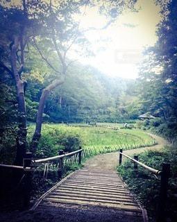森を抜けて橋を抜けて続く道の写真・画像素材[3373100]